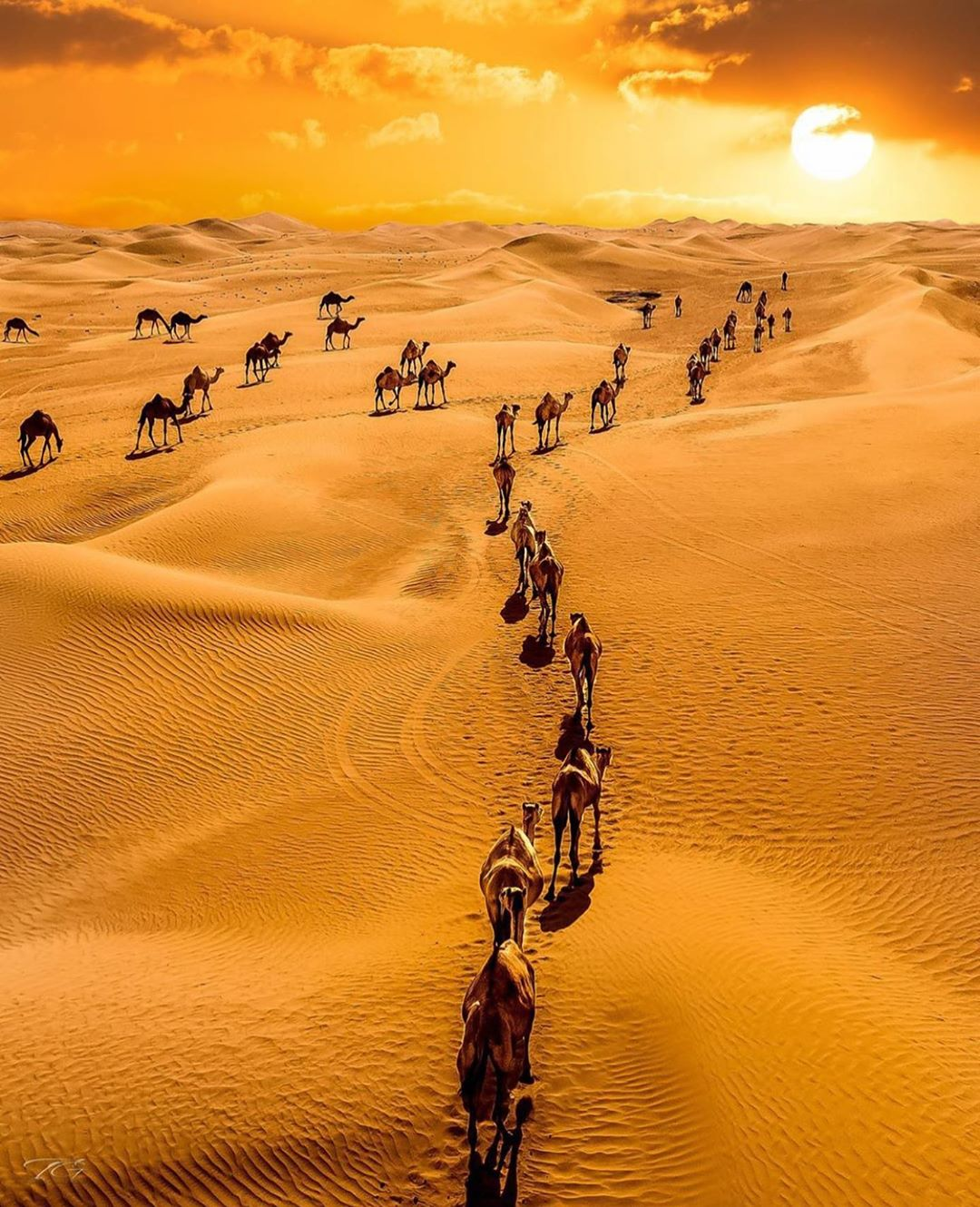 DESERT SAFARI-AN AMAZING PLACE TO VISIT IN DUBAI
